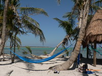 Hammock on a palm lined beach in Yucatan