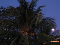 Moonrise in Tamarindo